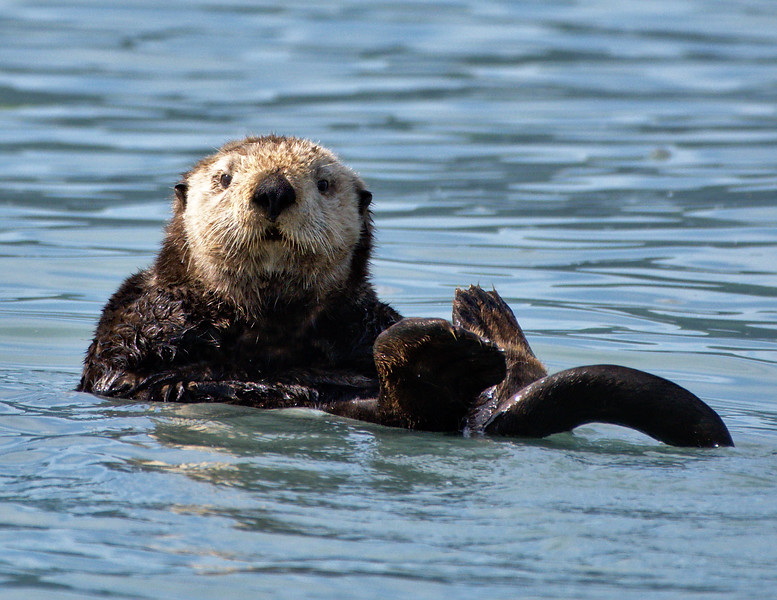 Sea Otter - September in 2019 Calendar