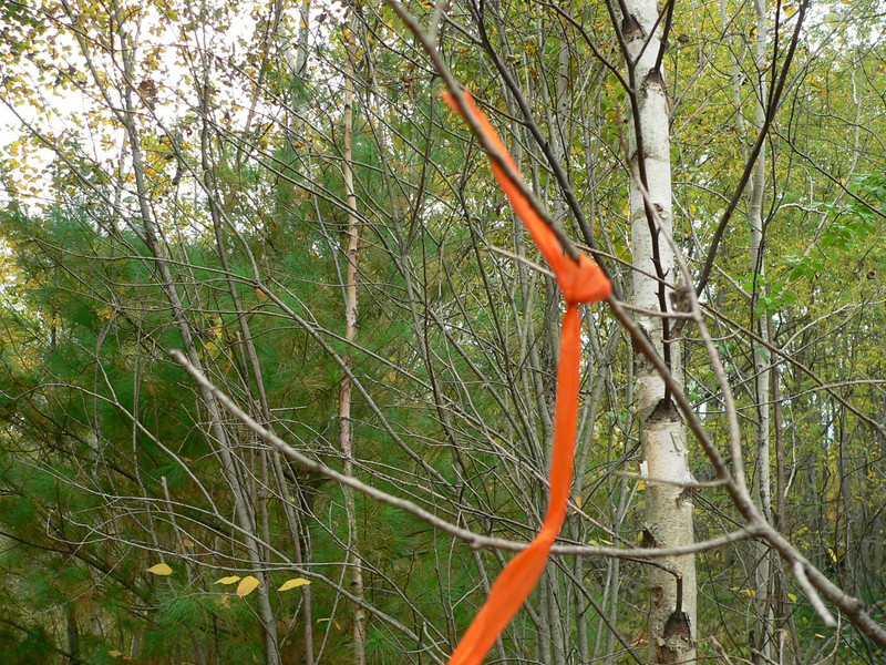 Occasionally we marked blood signs with orange tape so we could get back to the marked places if we needed to.