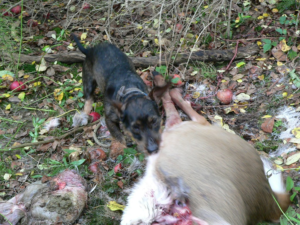 Billy got his reward by tugging a deer...