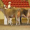 CalgarySpringJersey16_IMG_4163