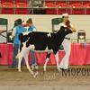 CalgarySpringHolstein16_L32A9723