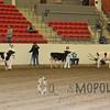 CalgarySpringHolstein16_L32A9721