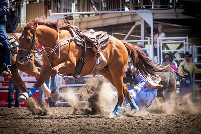 Calgary_Stampede_2014-5235