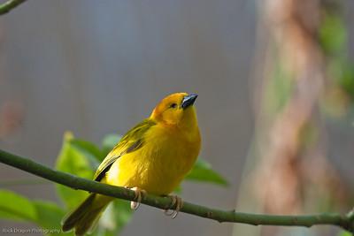 Bird, Calgary Zoo, Dec. 6