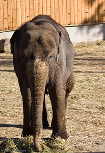 Elephant, Calgary Zoo, Nov. 30