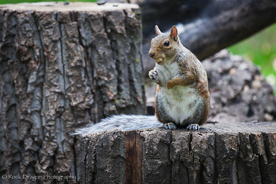 A Squirrel at the Calgary Zoo.