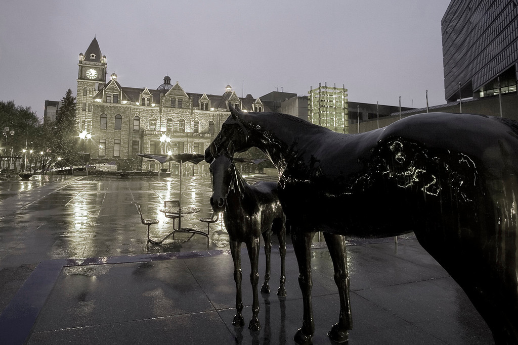 Horse statues in front of the Calgary Municipal Building - Clty Hall is in the background (monochromed)