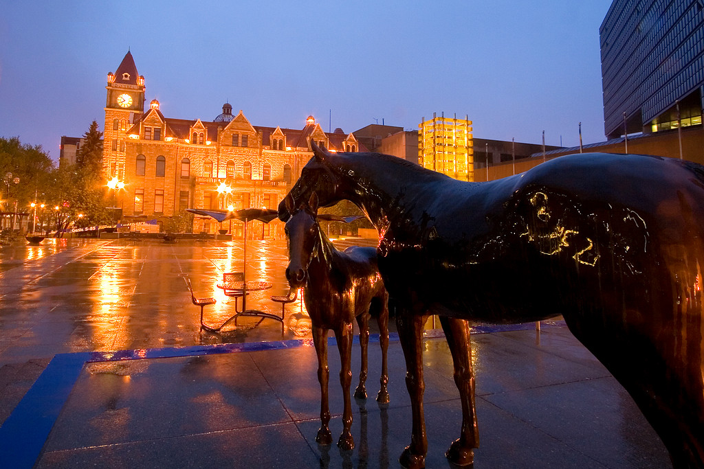 Horse statues in front of the Calgary Municipal Building - Clty Hall is in the background