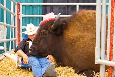 sleeping bufallo and cowboy