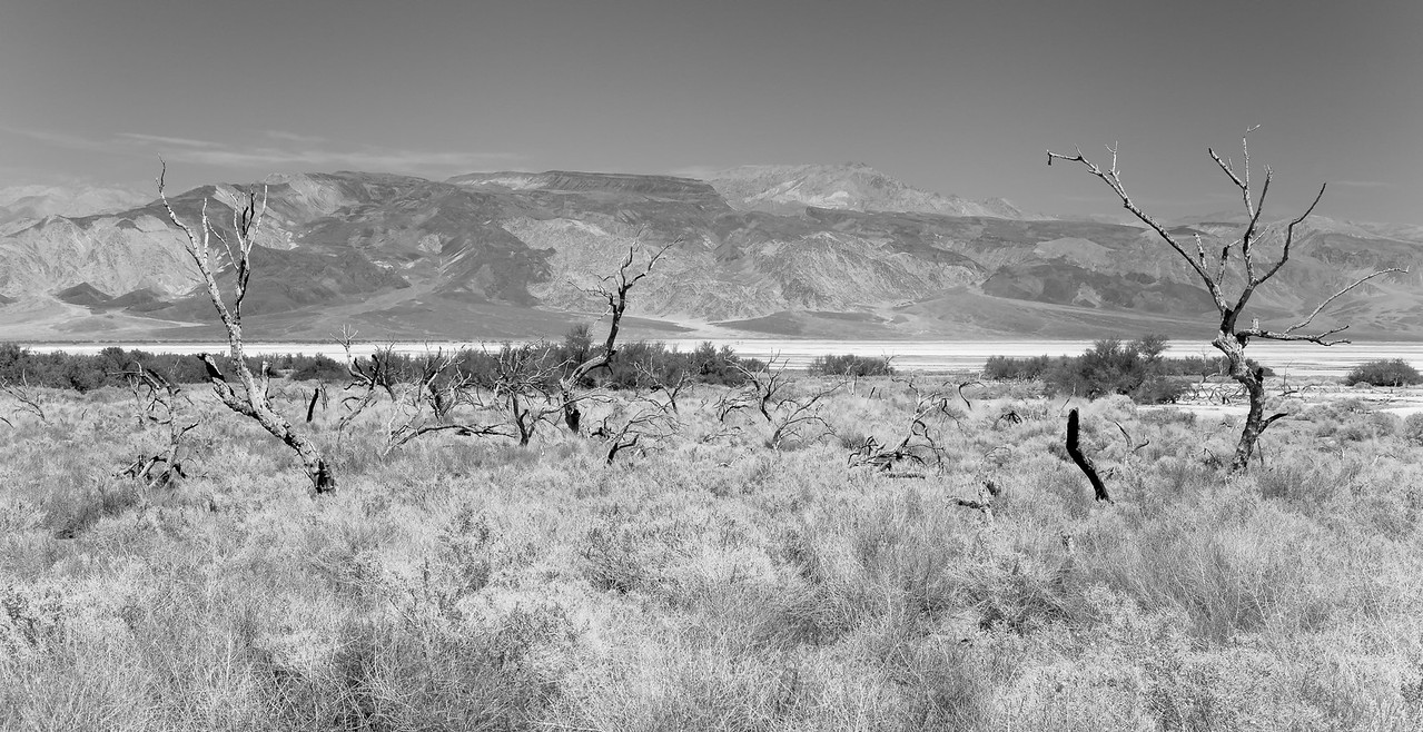 Looking Across the Saline Valley