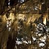 Illuminated Spanish Moss