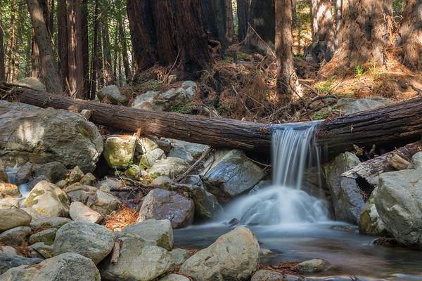 Cascading Over a Fallen Redwood