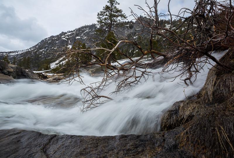 Spring Runoff through a Fallen Tree
