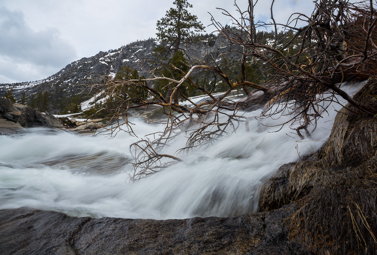 Spring Runoff through a Fallen Tree
