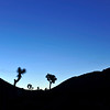 Sunrise, Ryan Campground, Joshua Tree NP
