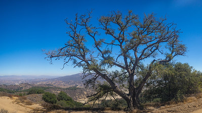 Overhanging Tree on California Mountain
