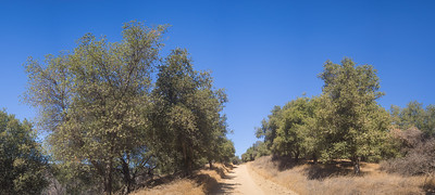 Dirt Road through California Woods