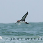 Sterling's California Pelagic Wildlife : Seabirds, Marine Mammals, and fish on the ocean off California