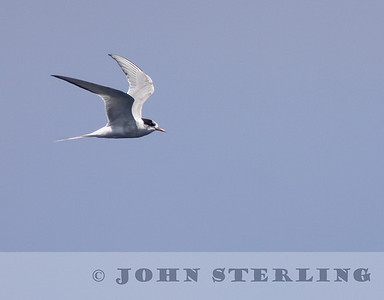 Sterling's California Pelagic Wildlife