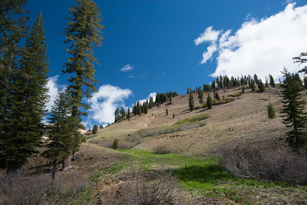 Cascade Mountains; Lassen Volcanic National Park In retrospect, the lack of snow on this slope was unusual for our hike. The grass even already browned.