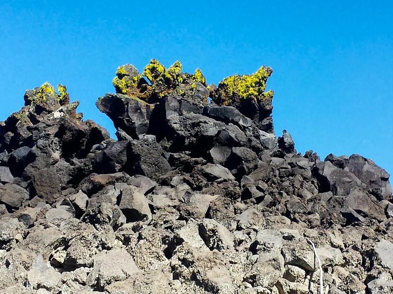 Lichens on Basalt