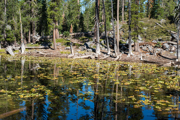 Cascade Mountains; Lassen Volcanic National Park; california; lake; national park The water in Lassen Volcanic NP is incrediblly clear. The plant life, light, and water played beautifully together.