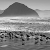 Rock 'n Birds _ bw