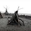 Driftwood III