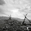Driftwood I_bw