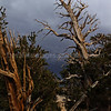 Storms over Ancient Bristlecone Pines 1