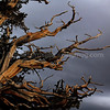Storms over Ancient Bristlecone Pines 3