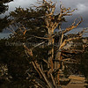 Storms over Ancient Bristlecone Pines 2