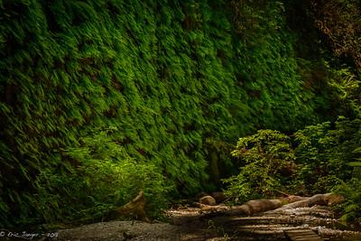 Fern Canyon, Prairie Creek Redwoods