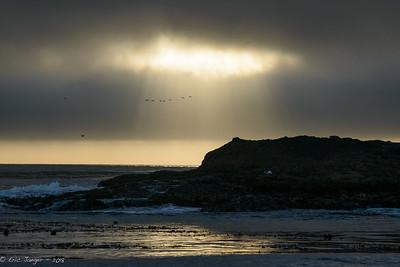Birds and Sunbreak, Point Lobos
