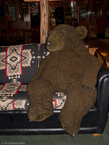 Friendly bear looking for company ...