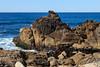 Coastal View - 17 Mile Drive #0807