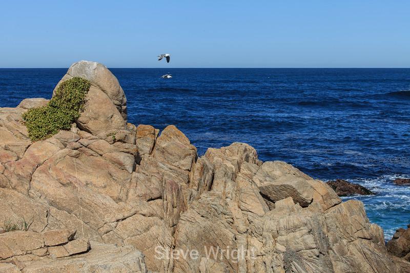 Coastal View - 17 Mile Drive #0542