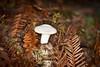 Fungi - Big Basin #0026