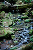 Berry Creek - Big Basin #0104