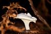 Fungi - Big Basin #0017