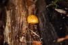 Fungi - Big Basin #0062