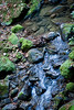 Berry Creek - Big Basin #0094