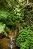 Berry Creek - Big Basin #0039