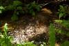 Berry Creek - Big Basin #0006