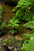 Berry Creek - Big Basin #0024