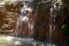 Berry Creek - Big Basin #9893