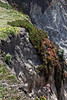 Bodega Bay -BodegaHead 05-03-14 (065 Enh