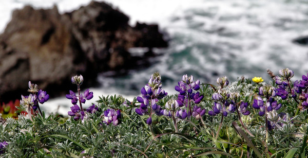 Bodega Bay Headlands