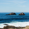 Sea Lions - Coast #8098