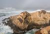 Coast - Garrapata #5324